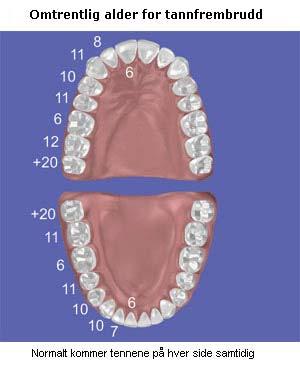 menn og kvinner hvor mange tenner har en von
